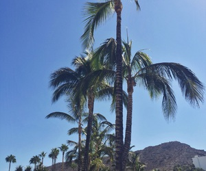 palm trees, photography, and sky image