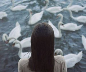 Swan, girl, and water image