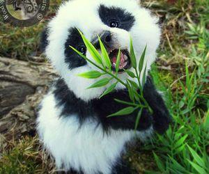 animal, animals, and panda image