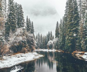 adventure, forest, and landscape image