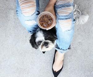dog, fashion, and style image