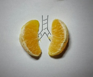fruit, lungs, and medicine image