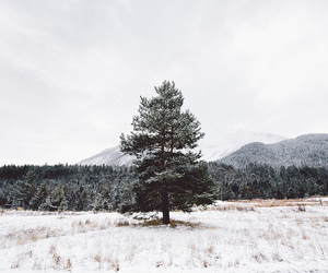 cold, forest, and landscape image