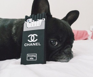 chanel, black, and dog image