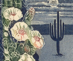 desert, flowers, and night image