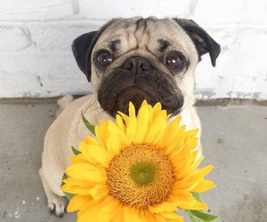 cute, dog, and flowers image