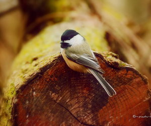 nature and bird photography image