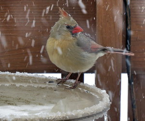 bird and snow image