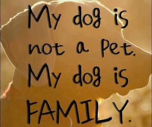 family, dog, and animal image