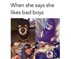 dog, funny, and bad image