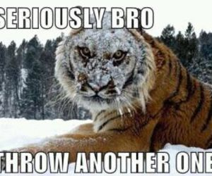 funny, tiger, and snow image