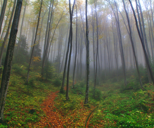 autumn, beautiful, and bulgaria image