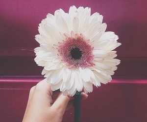 flor, flower, and magenta image