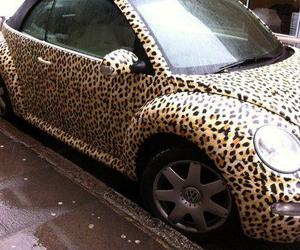 car, leopard, and beetle image