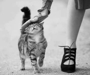 cat, animal, and black and white image