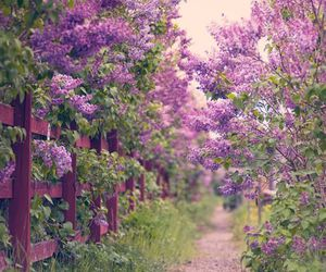 flowers, nature, and purple image