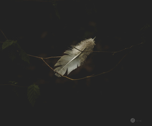feather and wings image