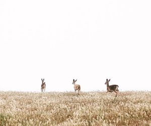deer, nature, and white image