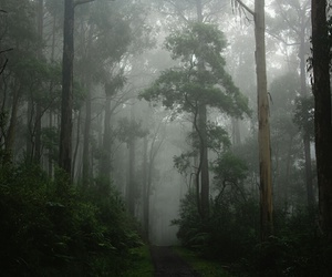 australia, forest, and green image