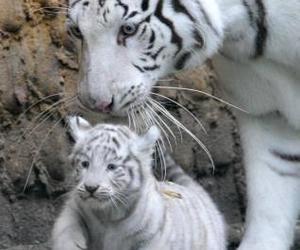 nature, white, and tigre blanco image