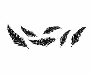 feather, black, and black and white image