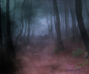 forest, fog, and dark image