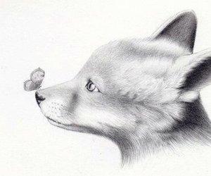 animals and fox image