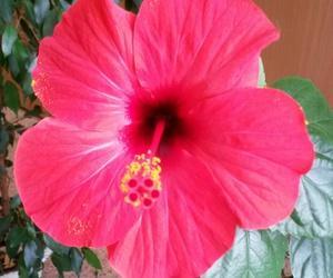flower and hibiskus image