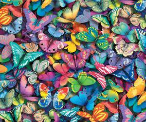 butterfly, colorful, and colors image