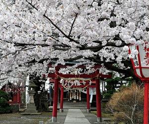 japan, tree, and beautiful image