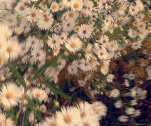blur, daisies, and flowers image