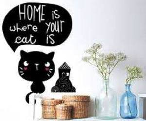 cats and home image