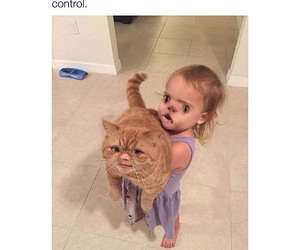 funny, cat, and hilarious image
