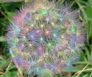 dandelion, rainbow, and flowers image