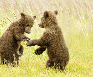 babies, bears, and games image