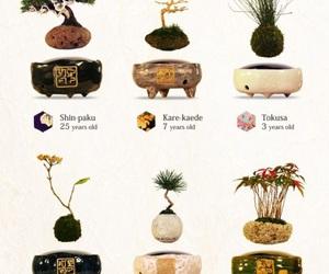 bonsai, japan, and air bonsai image