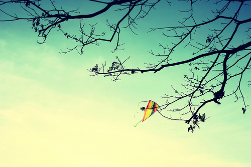 blue, branches, and kite image