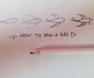 bird, draw, and drawing image