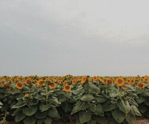 flowers, quote, and sunflower image