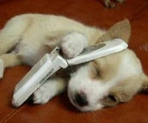 dog, phone, and puppy image