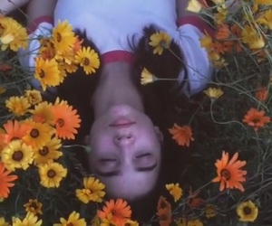 flowers, article, and sad image