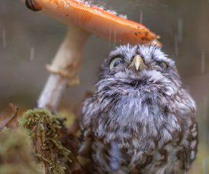 owl, animal, and rain image