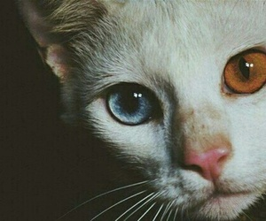 animals, blue eyes, and cute image