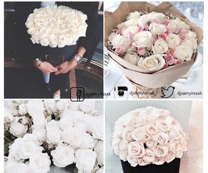 rose, love, and white image