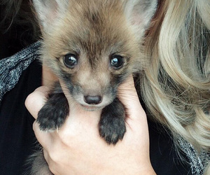 baby animals, cute animals, and cub image