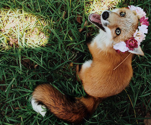 baby animals, foxes, and cub image
