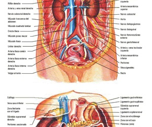 anatomia, doctor, and medicine image