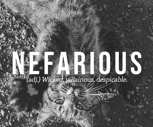 words, nefarious, and cat image
