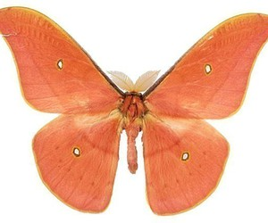butterfly, salmon, and wings image
