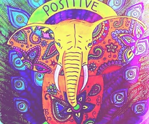 animals and positive image